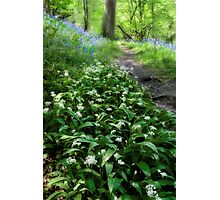 Ramsons and Bluebells Photographic Print