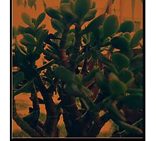 In This Life ... Photographic Print