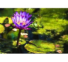 Waterlilies Impressions – Sunny Purple Pair Photographic Print