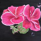 Pink pelargonium by Denise Martin