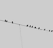 Birds above the trainrails by Inga Broerse