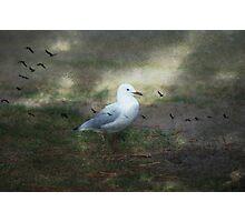 Taking flight Photographic Print