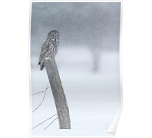 Watching over winter... Poster