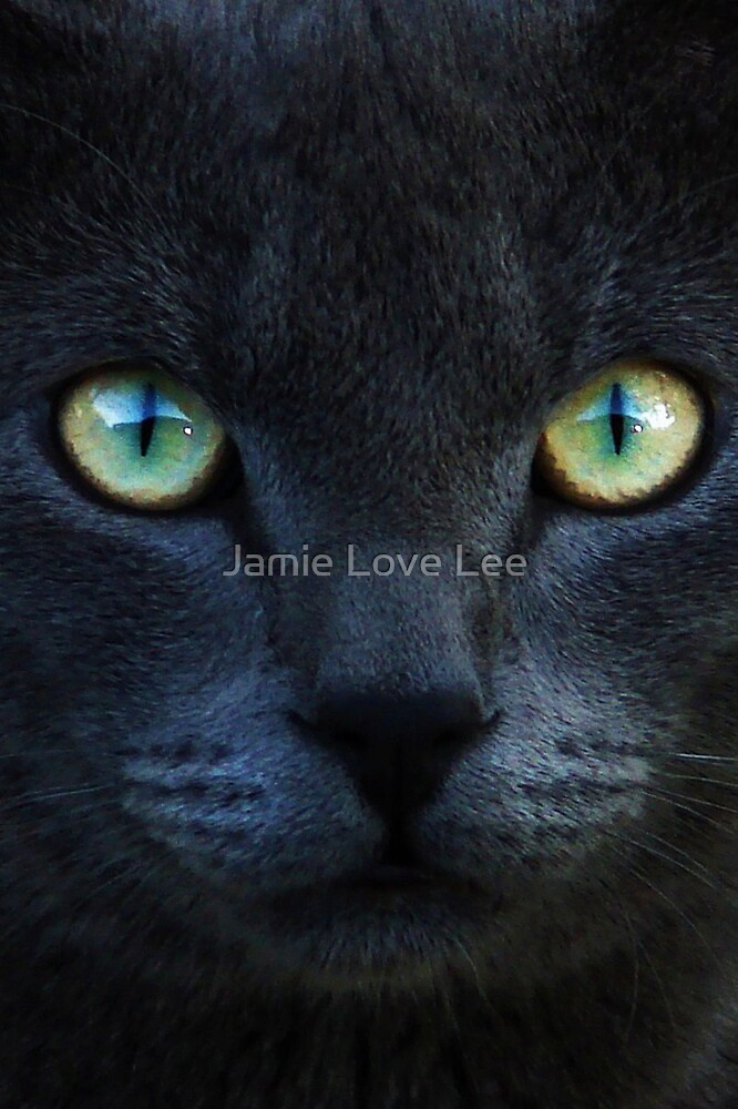 Here Kitty, Kitty by Jamie Lee