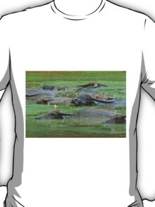 Water Buffaloes Resting in Nasty Green Water T-Shirt