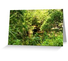 JUNIPER SPRINGS Greeting Card
