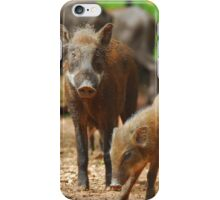 Mother Pig and Her Piglets 2 iPhone Case/Skin