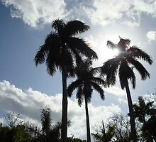 Florida Palm Trees by Hilary Boggs