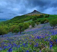 Roseberry Topping Bluebells by Stewart Laker