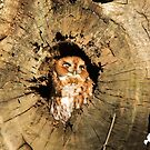 Eastern Screech Owl with Tilted Head by imagetj