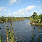 The Everglades National Park, yet again by Hilary Boggs