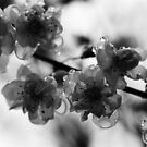 Drops by Zeanana