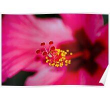 Hibiscus center Poster