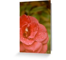 sun faded flower Greeting Card