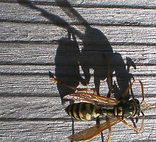Yellow Jacket's Shadow by 1greenthumb