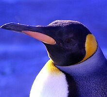 King Penguin by Kevin Meldrum