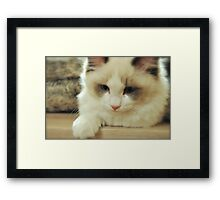 Sweetest little thing. Framed Print