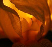 Illuminated by Gaby Swanson  Photography