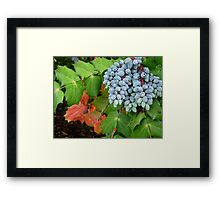 Oregon Grape Framed Print