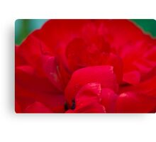 macroredcomp, red , flower, macro Canvas Print