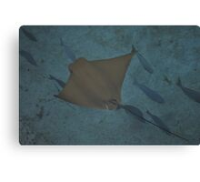 cow nose ray Canvas Print