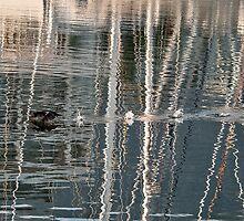 Cormorant takeoff by awefaul