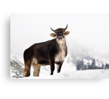 I Don't Like Snow Canvas Print