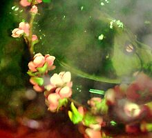 Cherry blossom by abigail abbott