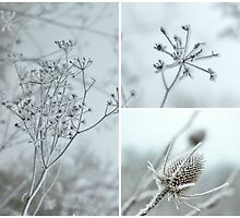 Frosty Twigs  by Kate Towers IPA