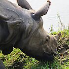 Rhino close up  by Liam  Camp