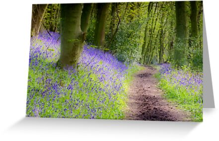Bluebells by Steven  Lee