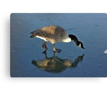 Goose on Ice Canvas Print