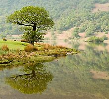 A Lonely Crummock Tree by Steven  Lee