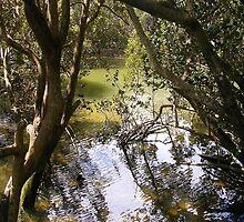 Mangroves in Whangarei by lezvee