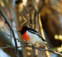 Red Capped Robin by Biggzie