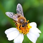 BEE ALMIGHTY (CUBA) by jdmphotography