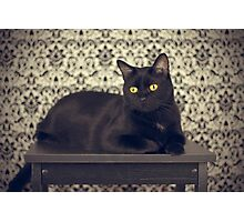 Mongo, The Robust Kitty Photographic Print