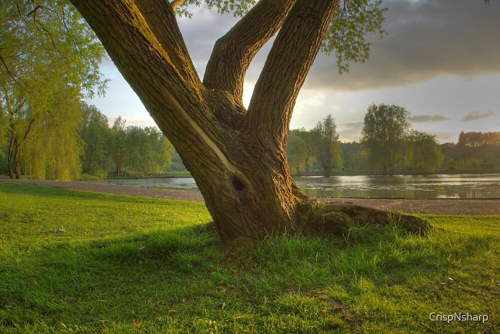 Eve Tree by CrispNsharp
