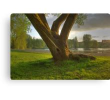 Eve Tree Canvas Print