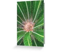 Journey to the Center of a Cycad Greeting Card