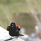 I am SO a Red-winged Blackbird! See my red wings! by Stephen Thomas