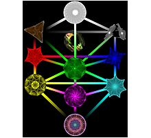 The Tree of Life of Light Photographic Print
