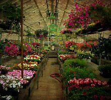 Spring Delight by Sonja Svete