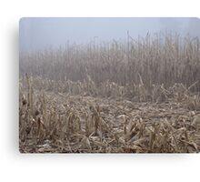 Corn in the Mist Canvas Print