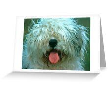 Shaggy Old English Sheep Dog Greeting Card