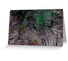 'Palms Renew' Greeting Card