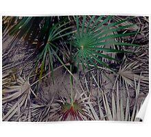 'Palms Renew' Poster