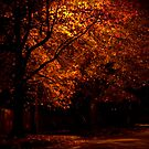 Evening Color by Tom Vaughan