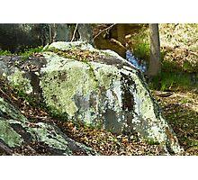Boulder with lichen Photographic Print