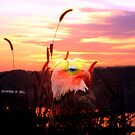 EAGLE EYE SUNRISE by Spiritinme